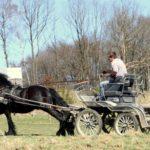 friese-olpe-kutsche-drolshagen-essinghausen-bb_image0007-150x150 Rasante Fahrt durchs Gelände RG-Hof-Höherhaus  Reiter Kutsche Friese