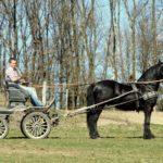 friese-olpe-kutsche-drolshagen-essinghausen-bb_image0010-150x150 Rasante Fahrt durchs Gelände RG-Hof-Höherhaus  Reiter Kutsche Friese