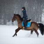 SchneeHannah-für-Facebook-1-von-7-150x150 Pferdchen vor der Kamera Pferdebilder