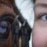 SchneeHannah-für-Facebook-7-von-7-150x150 Pferdchen vor der Kamera Pferdebilder