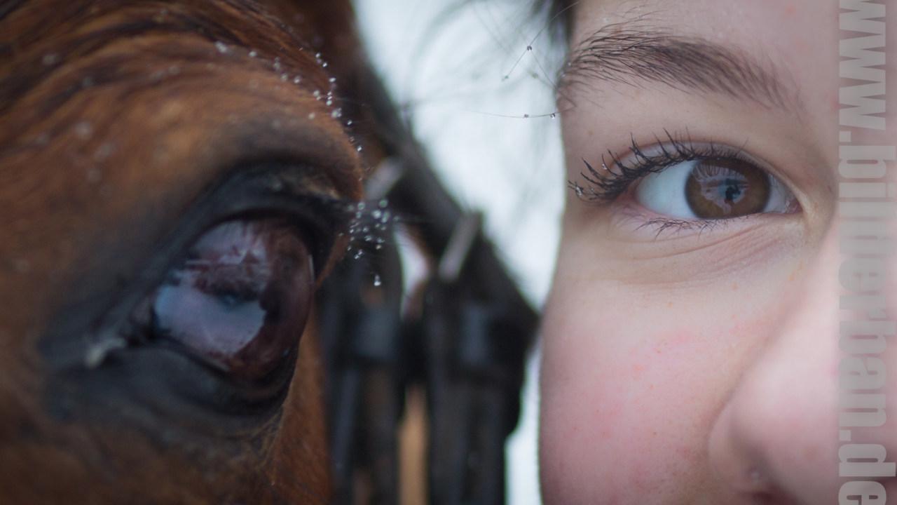 SchneeHannah-für-Facebook-7-von-7 Pferdchen vor der Kamera Pferdebilder
